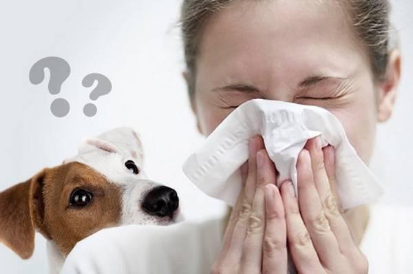 Аллергия на собаку анализ крови