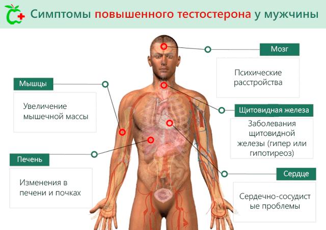 Повышенный тестостерон у мужчин: причины, последствия, симптомы и признаки