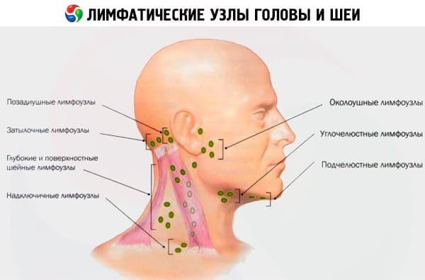 Лимфатический узел в паху